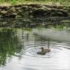 05-family-swim