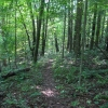 12-trail-near-leesville-lake
