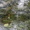 09-water-snake