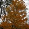 39-fall-colors