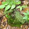 12-lichens-and-liverworts