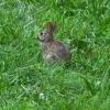 03-bunny
