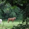 09-pretty-horse