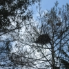 18-nest-in-tree
