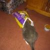 24-cheryls-hungry-cat