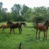 04-frisky-horses