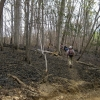 25-burnt-area-at-tar-hollow-state-forest