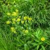 32-pretty-yellow-flower