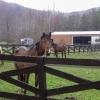 22-bens-happy-trails-horse-camp