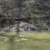 11-beaver-lodge