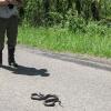 08-richard-and-the-snake