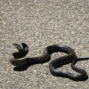09-snake-not-slithering