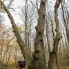 05-jim-in-front-of-unusually-shaped-tree