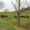 19-curious-cows