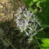 18-wild-hyacinth