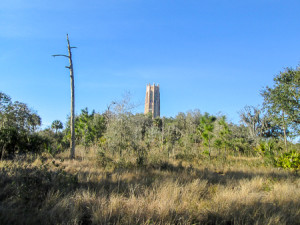 Bok Tower in the distance