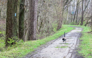 The official Buckeye Trail Goose Escort