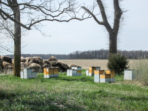 Bees were swarming around the hives and us