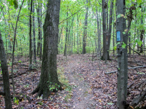 Hickory Grove Trail in Findley State Park
