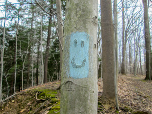 Birch tree face highlighted by BT blaze